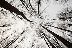 Tree silhouettes in Dunham, Quebec, Canada. 02/12/15. Photo by Andrew Tallon