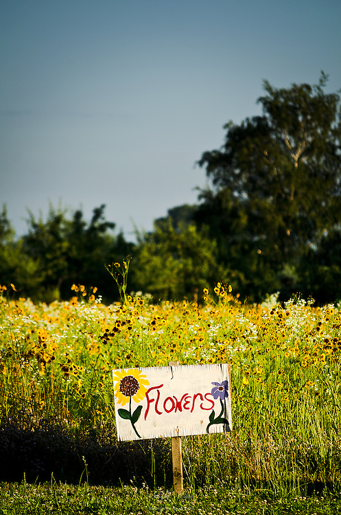 A field of flowers by the roadside in late spring.