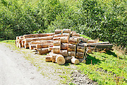 Timber industry. Harvested logs removed from a forest. Photographed in Tirol Austria.