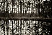 Trees reflected in a little pond // Reflectie van bomen in een meertje in natuurgebied de Appèlbergen, Haren.