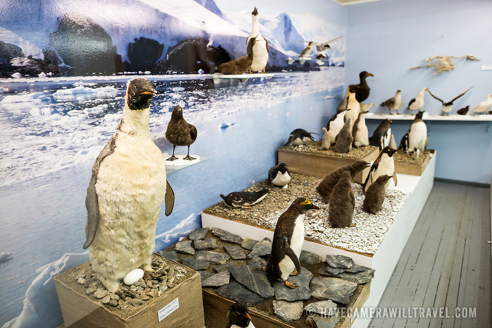 A display of different species of penguins from the region and Antarctica on display as part of the Antarctic Museum at the Maritime Museum of Ushuaia. The museum consists of several wings devoted to maritime history, Antarctic exploration, an art gallery, and an historic prison.