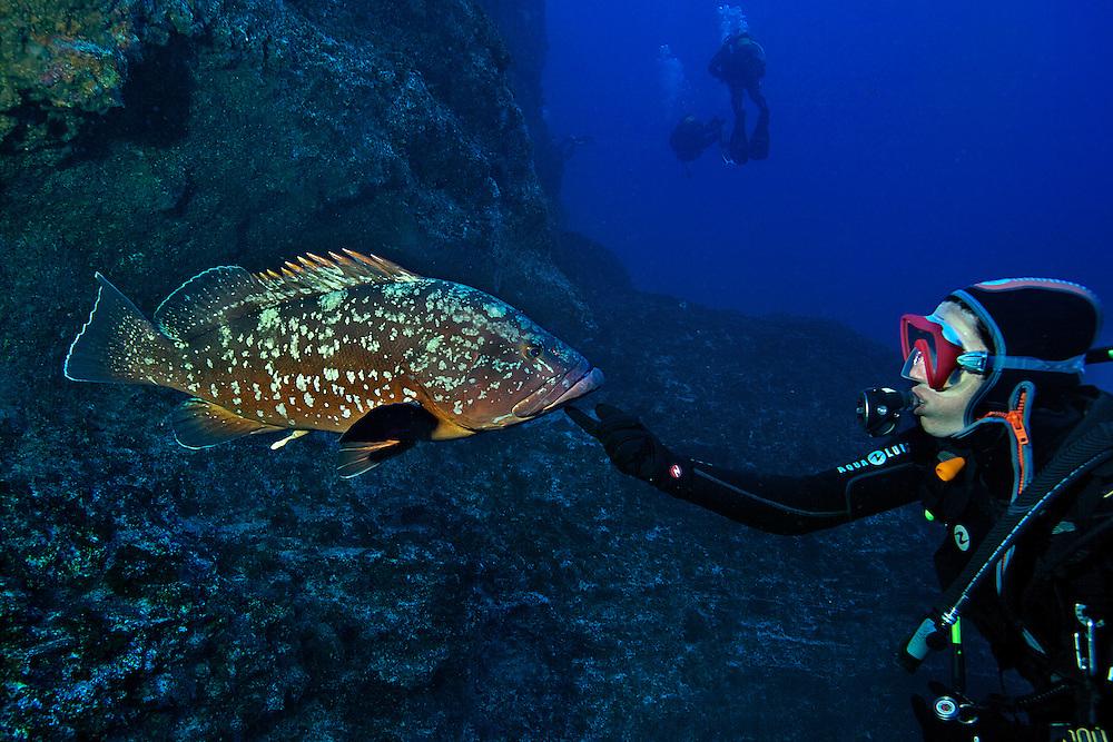 08/Abril/2014 Islas Canarias. El Hierro<br /> Inmersión en El Bajón con el centro de buceo La Restinga.<br /> Mero.<br /> <br /> © JOAN COSTA