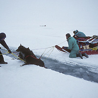 Expedition members teach dogs to cross an open water lead on frozen Arctic Ocean.