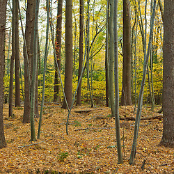In the forest at Elmwood Farm in Hopkinton, Massachusetts.