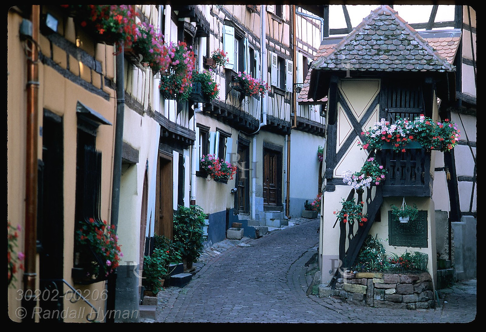 Half-timbered homes curve up cobblestone street dating from the Roman era; Eguisheim, Alsace. France