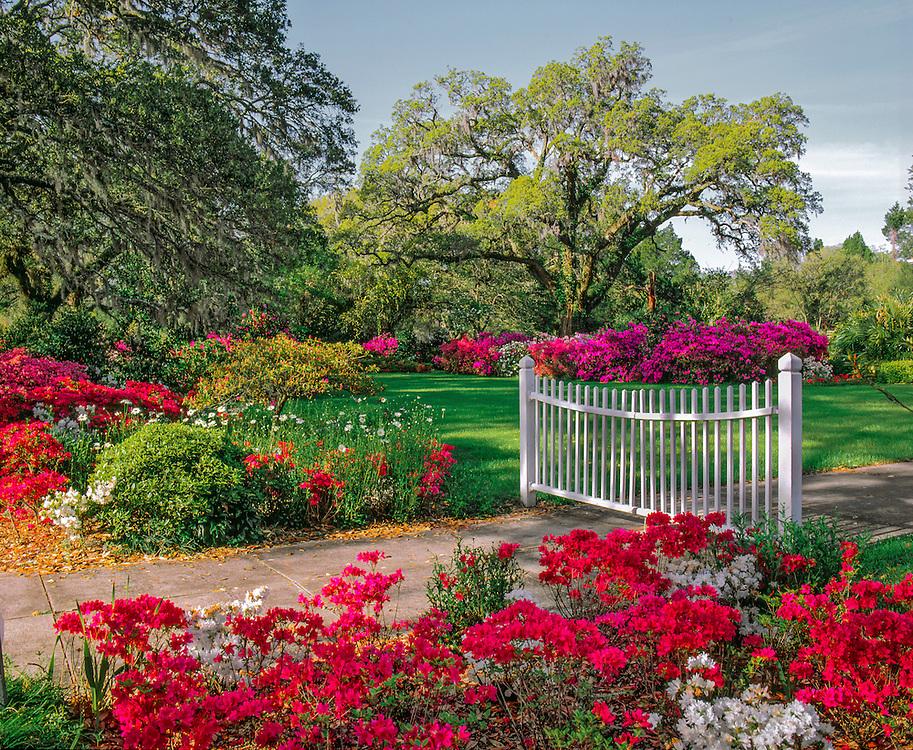 Spring greens & azaleas with white gate at Orton Plantation, Winnabow, NC