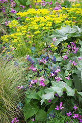 Honesty, cerinthe and Euphorbia oblongata in the cutting garden