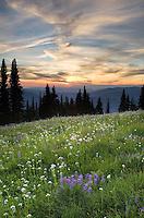 Skyline Divide wildflower meadows at sunset, Mount Baker Wilderness Washington