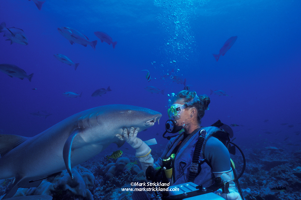 Diver Suzanne Forman greets a friendly Tawny nurse shark, Nebrius ferrugineus. This particular shark, affectionately known as Max, has been entertaining divers for over 14 years.  Burma Banks, Andaman Sea, Indian Ocean