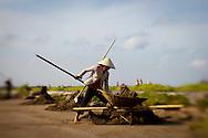 A Vietnamese woman loads soil into a cart, Nam Dinh province, Vietnam, Asia.