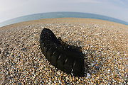 Remains of tyre washed up on Cley beach, North Norfolk, United Kingdom