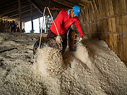 10 FEBRUARY 2016 - BAN LAEM, PHETCHABURI, THAILAND: A worker empties his basket of salt in a salt barn during the salt harvest in Phetchaburi province, Thailand. The salt harvest in Thailand usually starts in February and continues through May. Salt is harvested in many of the provinces along the coast, but the salt fields in Phetchaburi province are considered the most productive. The salt fields are flooded with sea water, which evaporates off leaving salt behind. Salt production relies on dry weather and producers are hoping the current drought will mean a longer harvest season for them.      PHOTO BY JACK KURTZ