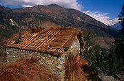 A villager lays fresh straw over the roof rafters of a building with the backdrop of Himalayan foothills and snow-tipped mountain peaks, on 10th November 1995, in Ghorepani, Himalayas, Nepal.