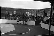 24/09/1963<br /> 09/24/1963<br /> 24 September 1963<br /> Goffs September Bloodstock Sales at the RDS, Dublin. Picture shows Lot 211 in the sales ring.