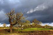 Winter trees in eastern Suffolk