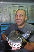 Israel, Coastal Plains, Kibbutz Maagan Michael, Man holding a large flathead mullet (Mugil cephalus) from the breeding school