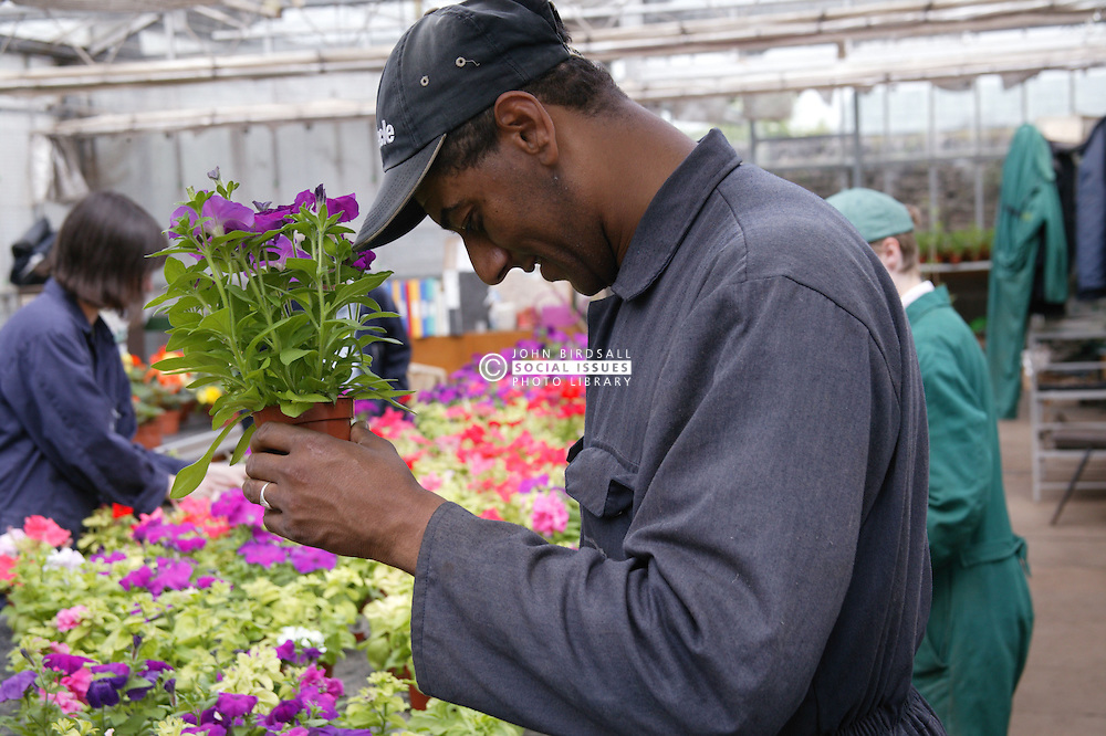 Man with learning disability at work at Brook Farm; Linby; holding flowers in greenhouse,