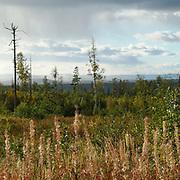 Vy från Bastbergs fäbod i Dalarna.<br /> PHOTO © Bernt Lindgren