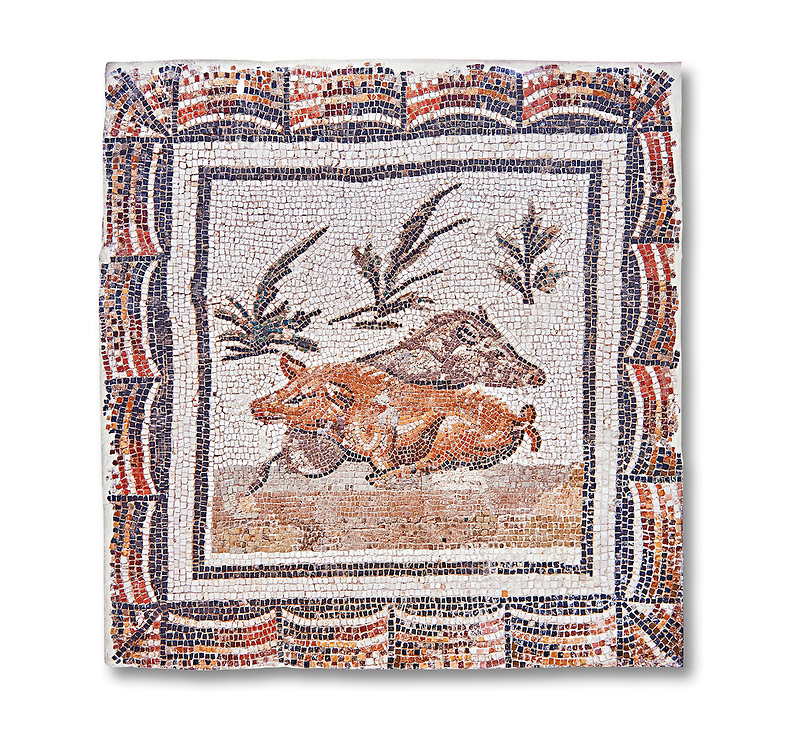 3rd century Roman mosaic panel of a boar and a sow lying down. From Thysdrus (El Jem), Tunisia.  The Bardo Museum, Tunis, Tunisia.  White background .<br /> <br /> If you prefer to buy from our ALAMY PHOTO LIBRARY  Collection visit : https://www.alamy.com/portfolio/paul-williams-funkystock/roman-mosaic.html - Type -   Bardo    - into the LOWER SEARCH WITHIN GALLERY box. Refine search by adding background colour, place, museum etc<br /> <br /> Visit our ROMAN MOSAIC PHOTO COLLECTIONS for more photos to download  as wall art prints https://funkystock.photoshelter.com/gallery-collection/Roman-Mosaics-Art-Pictures-Images/C0000LcfNel7FpLI
