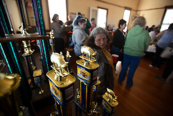 Trophies sit at the ready for the winners at the 22nd annual Spam Festival, Sunday, Feb. 16, 2019, in Isleton, Calif. Spam lovers competed for prizes by presenting their favorite Spam-infused foods, or entering the Spam-eating and Spam-toss contests. (Photo by D. Ross Cameron)