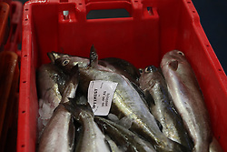 A box of freshly-caught pollock at Plymouth fish market.