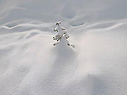 121802<br /> Snow, Mount Rainier