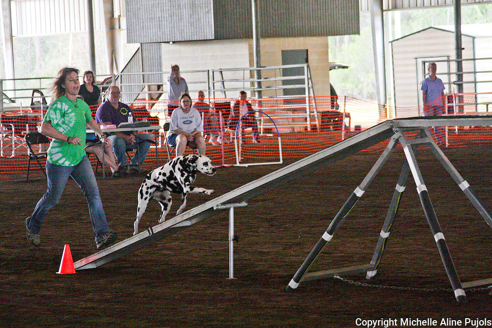 Dogs competing in agility trials on the beam