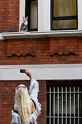 © Licensed to London News Pictures. 01/08/2018. LONDON, UK. A woman photographs Julian Assange's cat on a window sill outside the Equadorean Embassy in Knightsbridge.  The UK and Ecuador are holding ongoing talks over the fate of Wikileaks founder Julian, who has been in exile in the Ecuadorean Embassy since 2012.  He faces being arrested by UK police if he leaves the embassy for breaching bail conditions.  Photo credit: Stephen Chung/LNP