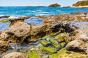 Montage Resort Tide Pools in Laguna Beach