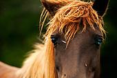 Wild Horses of Assateague