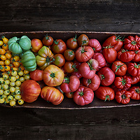 Sewickley, PA - September 16:  A portrait of a large bowl of heirloom tomatoes including Costoluto Genovese, Tlacolula, Snow White, Yellow Pear, Zapotec, Big Rainbow, Goldman's Italian, San Marzano, Japanese Black Trifele, and Mortgage Lifter heirloom tomatoes, grown from seed by the photographer in her garden in Sewickley Heights, PA during the summer of 2017. (Photo by Shelley Lipton)