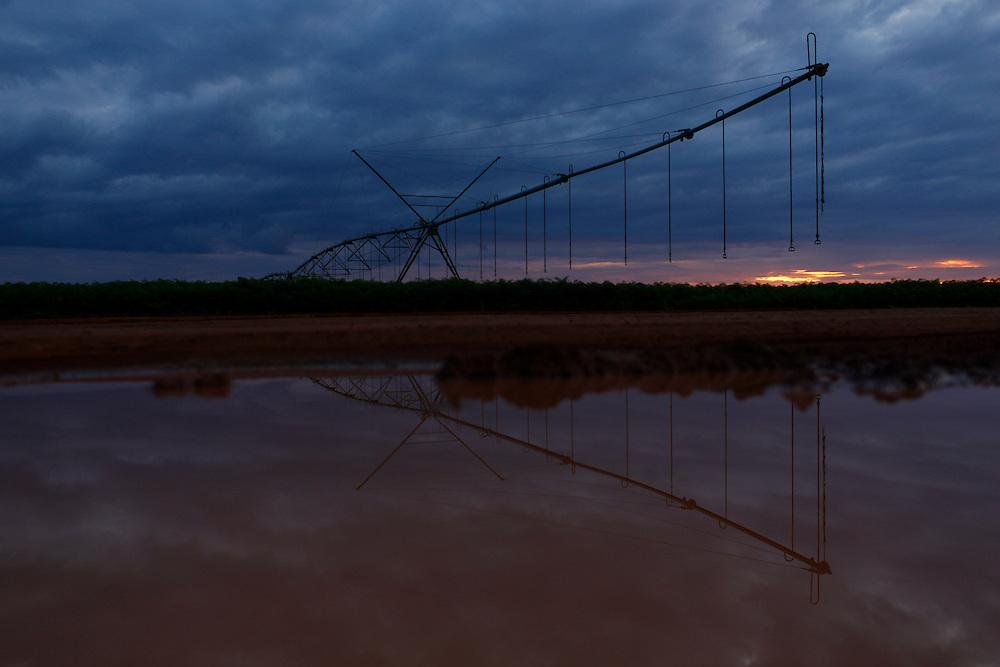Sao Gotardo_MG, 29 de abril de 2015<br /> <br /> Fotos dos produtores de cenoura na regiao de sao gotardo.<br /> <br /> Foto: MARCUS DESIMONI / NITRO