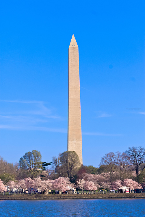 Cherry Blossoms, Cherry Tree Walk, Tidal Basin (with Washington Monument in background), Washington D.C., U.S.A.