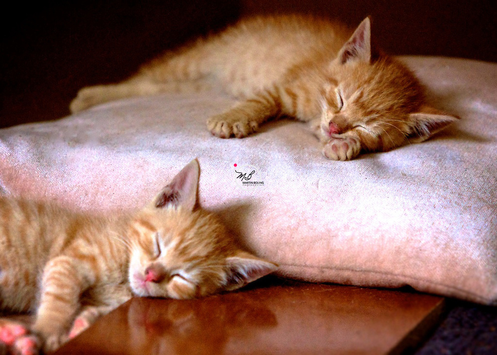 Kittens Napping
