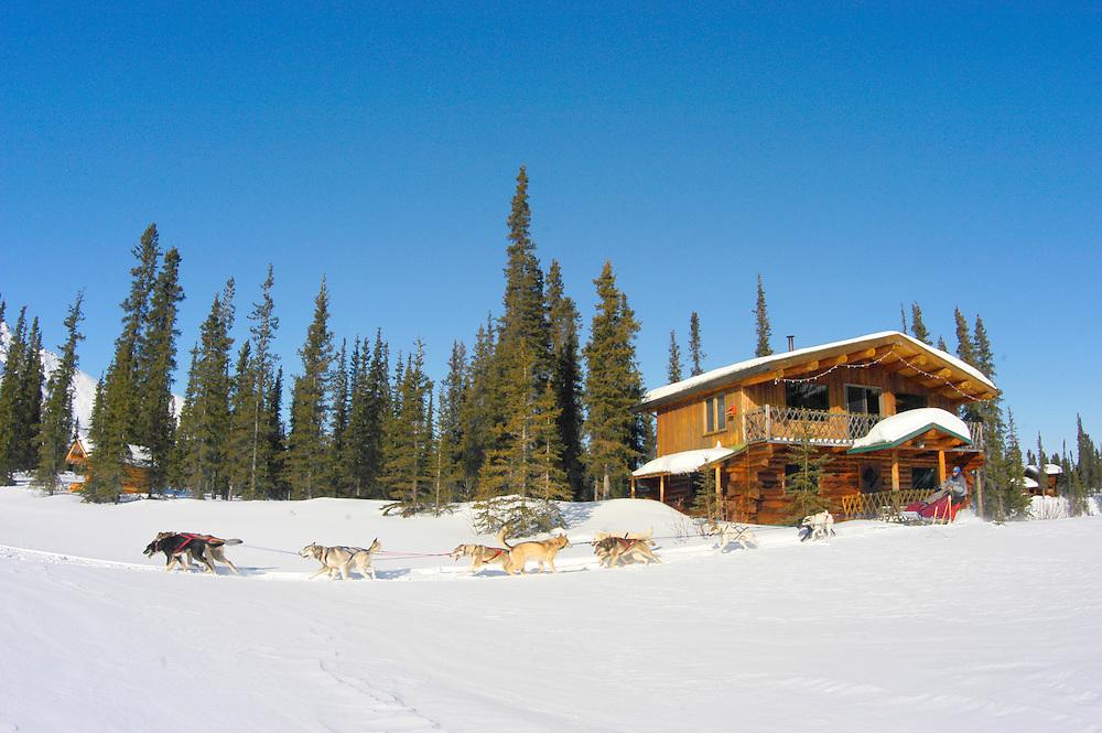 Alaska , Brooks Range. Iniakuk Lake Lodge. Dogsled team rushes past the lodge entrance.