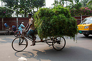 A rickshaw driver cycles down College Road in Ramna district on a rickshaw piled high with leaves used for animal feed on the 29th of September 2018 in Dhaka, Bangladesh.