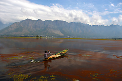 September 29, 2018 - Srinagar, Kashmir, India - A Kashmiri boat man rows his boat in the thick mat of red algae seen spread on top of the Dal Lake on September 29, 2018 in Srinagar, the summer capital of Indian administered Kashmir, India. The red algae on the top surface of the lake has given it ugly look besides affecting its flora and fauna. (Masrat Zahra/NUR Photo) (Credit Image: © Masrat Jan/NurPhoto/ZUMA Press)