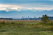 Many plant species grow in the tidal wetlands at Blackie Spit in Surrey, British Columbia, Canada. Buildings in background are the Metrotown area of Burnaby, BC, and the mountains behind are the North Shore Mountains (including The Lions).