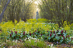 The Nuttery at Sissinghurst Castle Garden in spring. Trillium sessile in the foreground