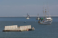 Commercial fishing boats anchored at Port San Luis, San Luis Obispo County, California