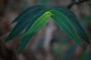 Conceicao de Alagoas_MG, Brasil.<br /> <br /> Estacao Ambiental de Volta Grande. Na foto vegetacao.<br /> <br /> Volta Grande Environmental Station. In this photo vegetation.<br /> <br /> Foto: JOAO MARCOS ROSA / NITRO