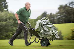 September 16, 2016 - Harrogate, Yorkshire, UK - Harrogate UK. Picture shows Paul Bastow & his prize winning cabbage that weighed 25.4 kg at the Giant vegetable competition in Harrogate. The competition see's competitors from across the UK show their biggest Carrot's, Cucumbers, Cabbages, Onion's & Tomatoes competing for the title of heaviest & longest at the Harrogate Autumn Flower Show. (Credit Image: © Andrew Mccaren/London News Pictures via ZUMA Wire)