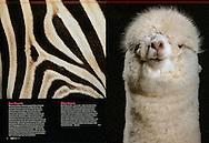 Publication: KIJK (Netherlands), No.03, March 2011, Photography by Heidi & Hans-Jürgen Koch/heidihanskoch.com
