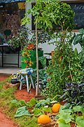 The Camfed Garden: Giving girls in Africa Space to Grow - Press preview day at The RHS Chelsea Flower Show.