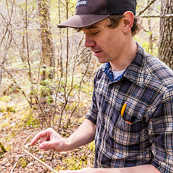 A forestry grad student (Cameron McIntire) with a core sample from a black gum tree (tupelo), Nyssa sylvatica. The core will be examined under a microscope to estimate the age of the tree. Barrington, NH.