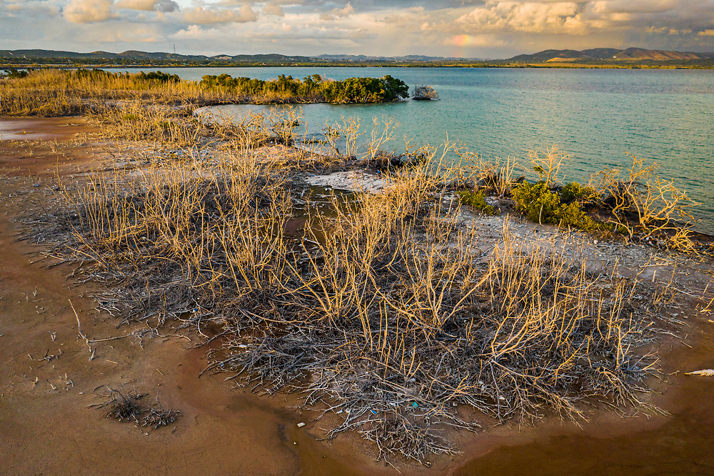 In Puerto Rico's southwest, Cabo Rojo, mangrove trees that died during hurricane Maria in 2017 have still not recovered in 2020. Mangroves are the best-known defence in large storms producing large waves. A shoreline is greatly weakened without mangroves.
