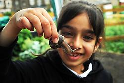 School children visit Bradford Community Environmental Project Allotments, 7th July 2010