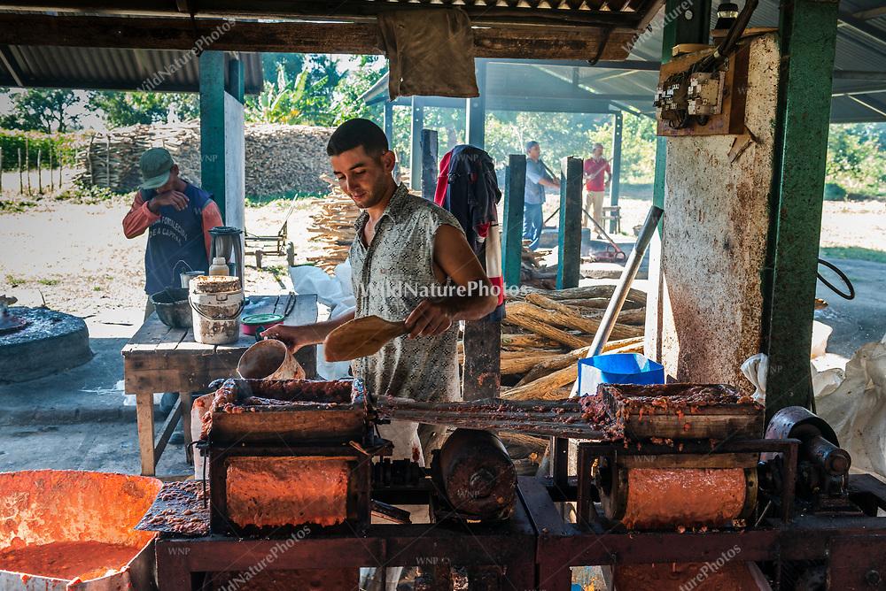 A worker controls the press making guava pulp during the process of making Guyaba bars (Florida, Camagüay Province, Cuba).