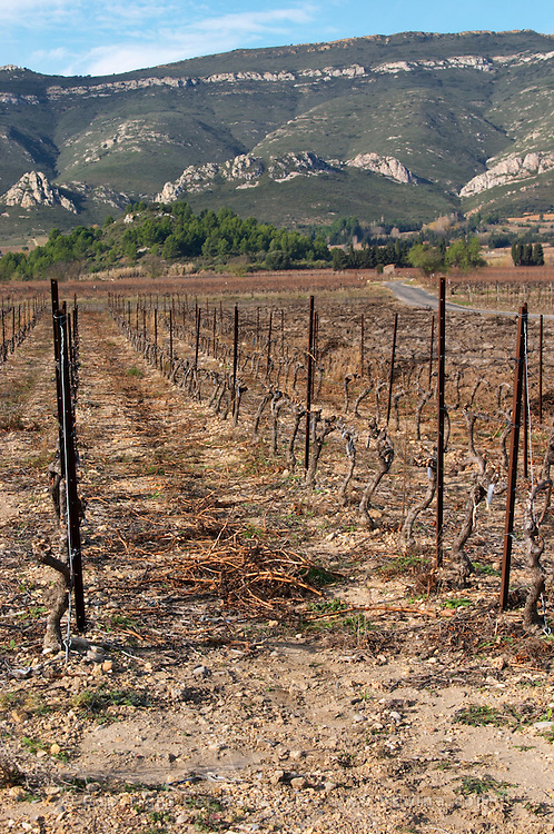Domaine Bertrand-Berge In Paziols. Fitou. Languedoc. France. Europe. Vineyard. Mountains in the background.