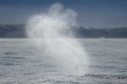 Blow of the Sperm whale (Physeter macrocephalus) Kaikoura, New Zealand | Pottwal (Physeter catodon oder Physeter macrocephalus) Kaikoura, Neuseeland